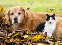 Senior pets will give you loyalty and companionship in return for your love.