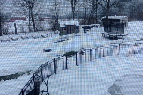 Snow was so bad that many had to create paths for their pets